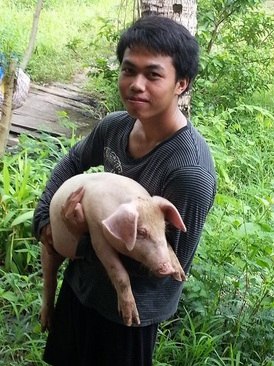 Pig farming in Thailand