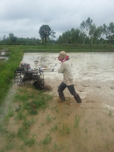 Preparing the paddy fields
