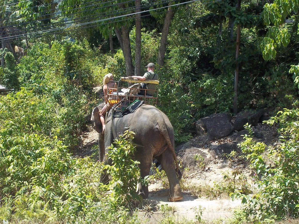 Elephant trekking in Koh Phangan