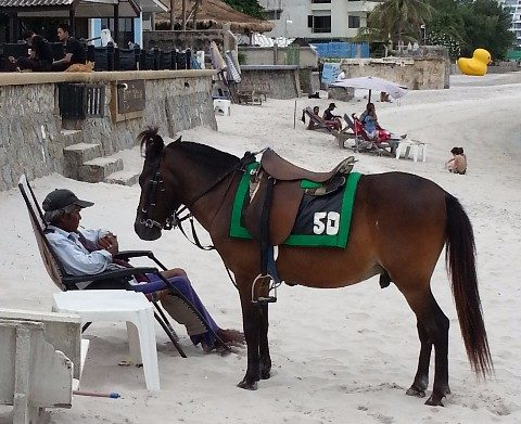 Horse on the beach at Hua Hin