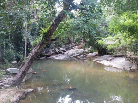 Tranquil pool at Wat Saunthamma Pala Nikrotharam