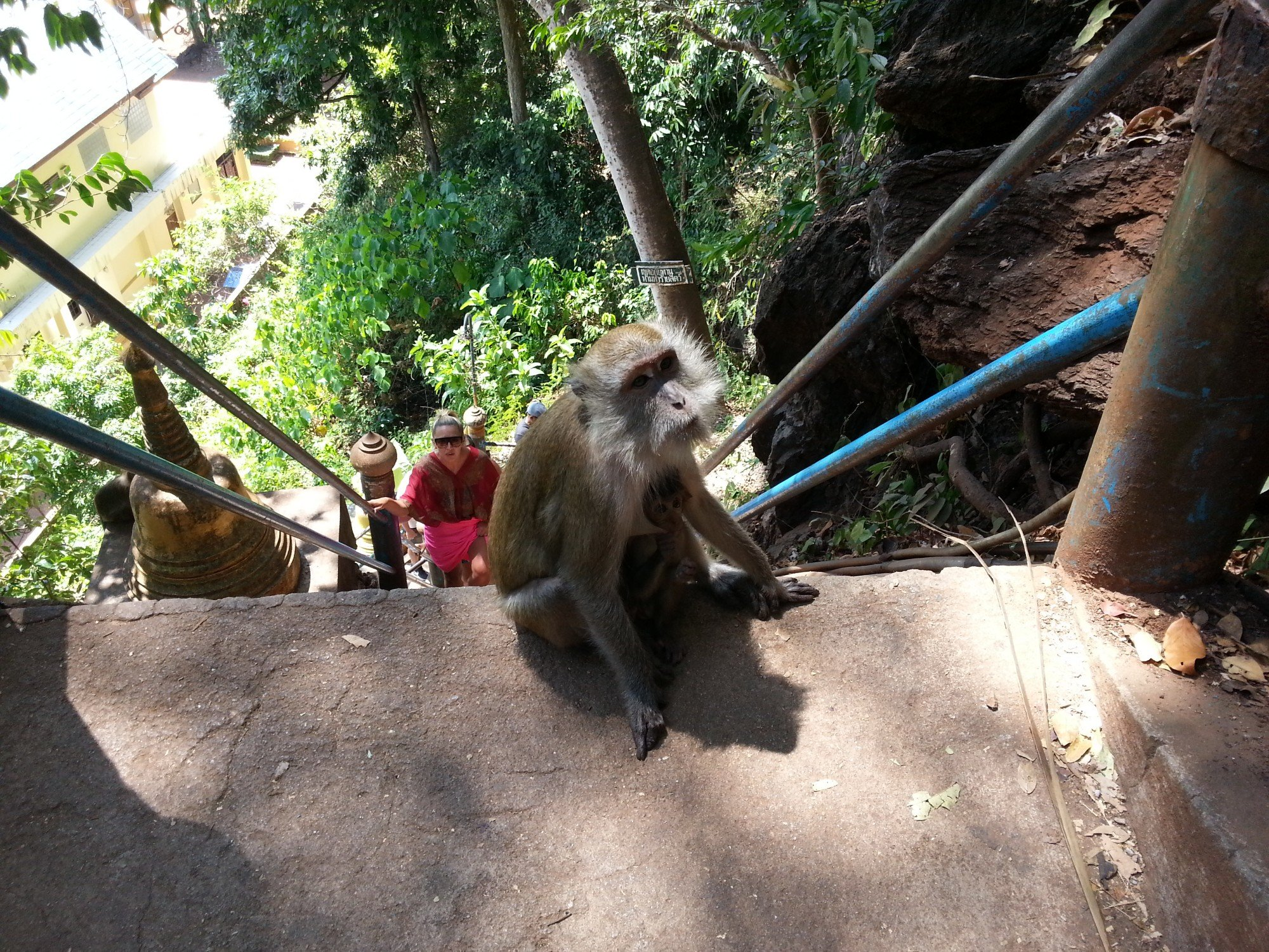 Monkeys on the steps up to the temple at Wat Tham Suea