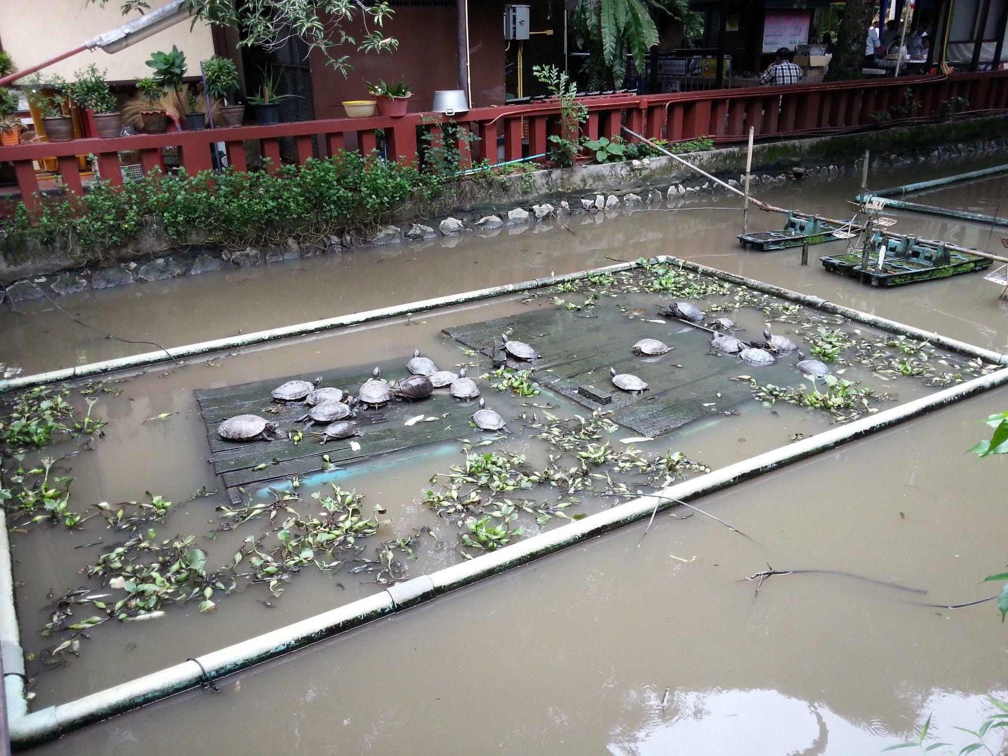 Turtle pond at Wat Phra Kaew