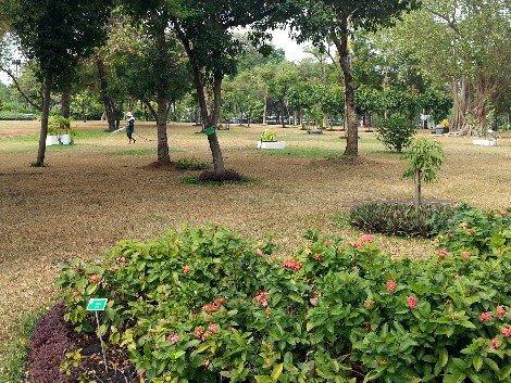 Garden at Rommaninat Park
